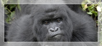 gorilla safaris and rwanda wildlife tours