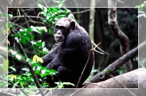 Ssese Islands tours in Uganda